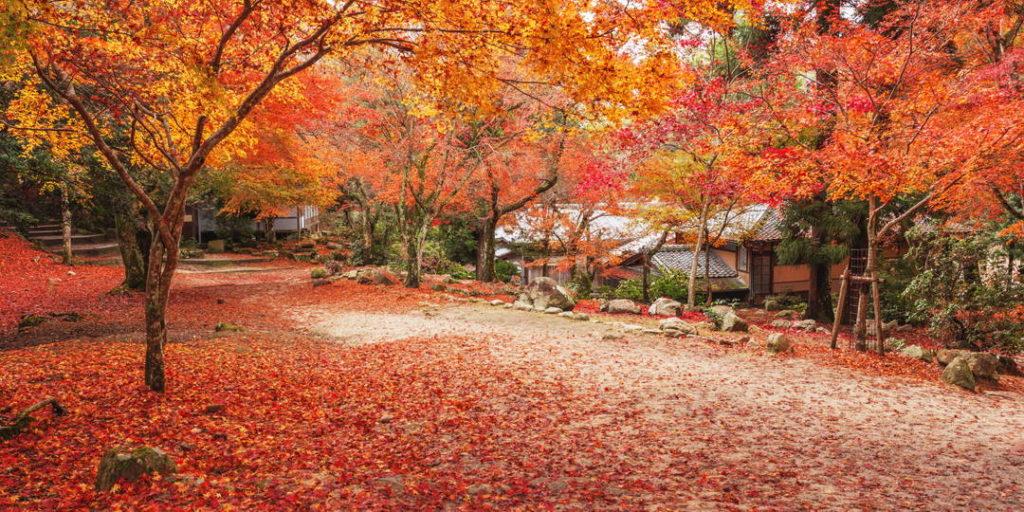Viajar a Japón por negocios o turismo: otoño.
